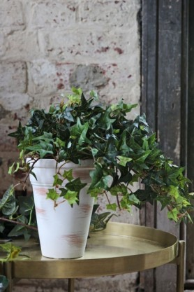 Lifestyle image of the Faux Ivy Plant In Tall White Pot