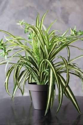 Faux Potted Spider Plant