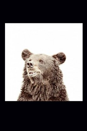 Magnet-Friendly Wallpaper - Bear - 2 Sizes Available