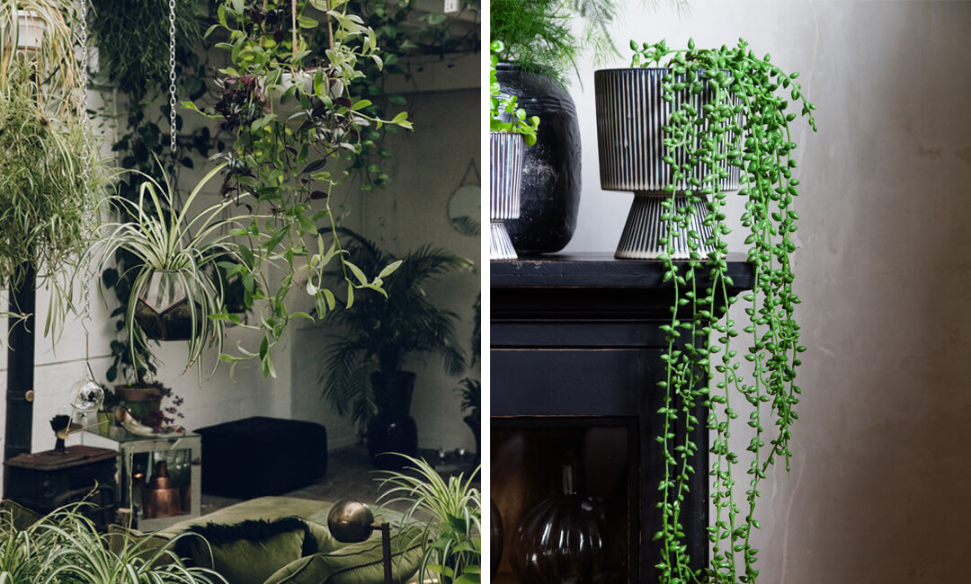 lifestyle images of real and faux plants in garden rooms