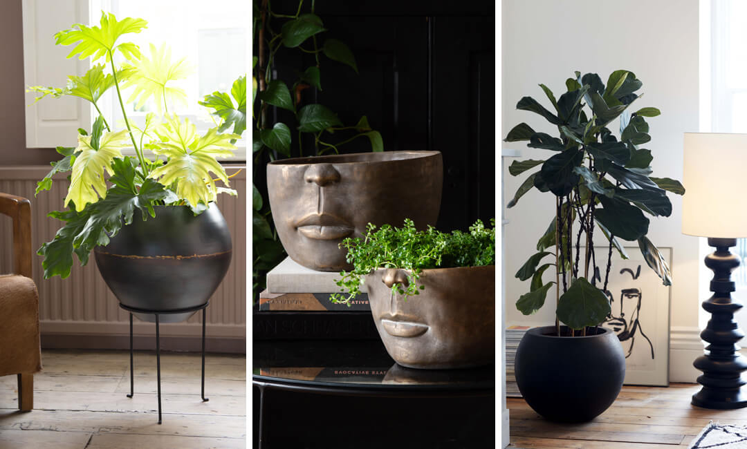 lifestyle images of plants and planters in the living room