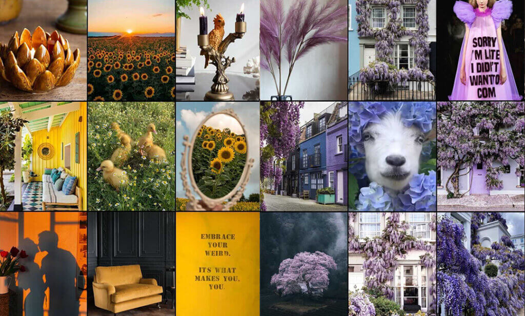 yellow and purple moodboard aestheics featuring images of nature, animals and interiors