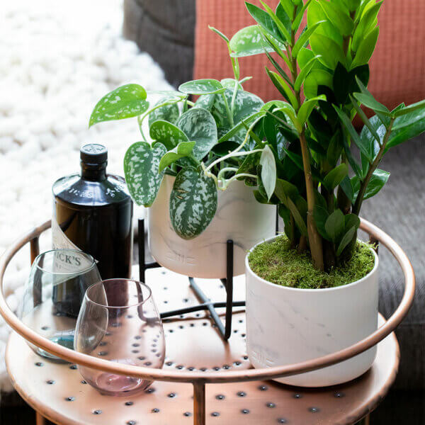 How To Keep Your Houseplants Happy With The Little Botanical